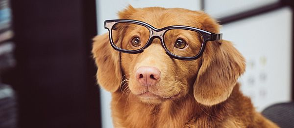 Did You Know Your Pet Can Wear Contact Lenses?