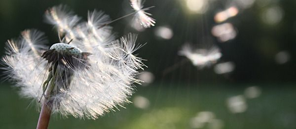 Hay fever Tips You Need To Know